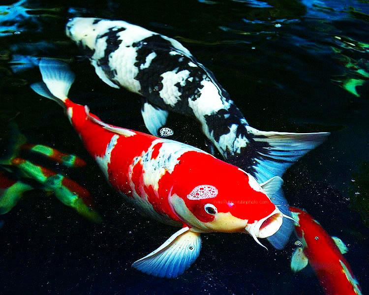 Морской аквариум в москве источник